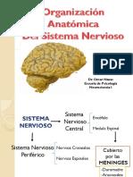 Anatomia del sistema nerviosos
