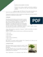 Las-plantas.docx