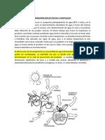 TRANSPIRACIÓN DE FRUTAS Y HORTALIZAS.docx