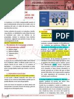 R1-04-F-15-02-TRANSPORTE_A_TRAVES_DE _LA_MEMBRANA_CELULAR.pdf