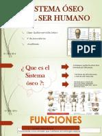 Diapositivas - Sistema Óseo (1)