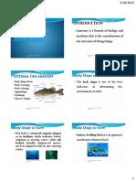 Lec 2 - Basic Fish Anatomy