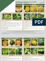 PP29700 ENFERMEDADES DE CITRICOS.pdf
