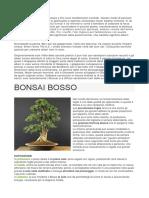 Caratteri Dell'Architettura Camaldolese
