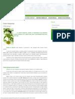 Culturi hidroponice