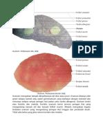 Struktur Jaringan Ovarium