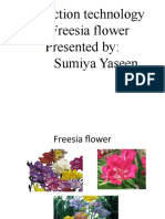 Production Technology of Freesia Flower[1]