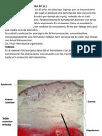 EXAMEN-PRACTICO-DE-PATOLOGÍA-2.pdf