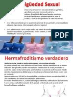 Presentación1-Embrio.pptx