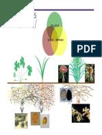 PPT_micorrizas y endofitos.pdf