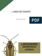 Plaga de Olmos