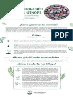 guiadegerminacion-semillas-lithops