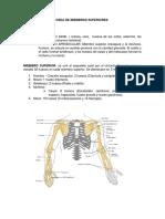Anatomia Osea de Miembros Superiores