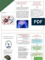 Triptico de Neuroplasticidad