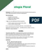 Biologia-Floral-resumen.docx