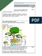 plantas7oano-130802171850-phpapp02