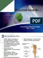 Aula CRB - 2º Ano - Morfofisiologia Vegetal - Raiz, Caule e Folhas