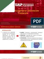 Psicopatologia de La Atencion.expoSICION