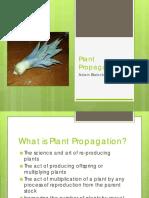 Plant Propagation by Adam.pdf