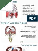 Diafragma Vascularizacion e Inervacion