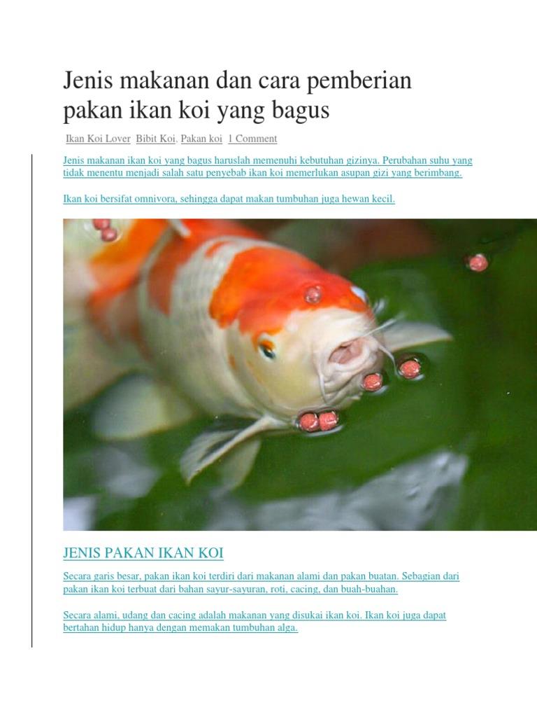 Jenis Makanan Dan Cara Pemberian Pakan Ikan Koi Yang Bagus