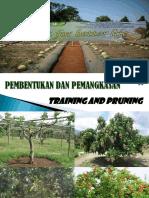 Minggu4_Training&Pruning.pdf