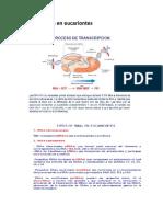 Transcripción en eucariontes.docx