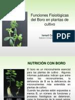 10. Funciones críticas del boro (Cakmak).pdf