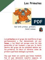6.  Diapositivas. Evolucion primates MODIFICADA.pptx