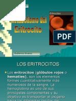 conentracion de glucosa y eritrocito