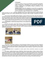 Capacidades Motoras e Testes Fitnessgram