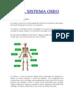 Qué es el sistema óseo.docx