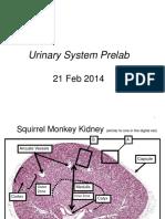 21+Feb+ROTHWELL_Urinary+Prelab_CPR2014a
