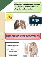 m.torax y Diafragma (4)