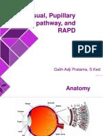 Visual, Papillary Pathway, And RAPD