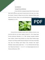 kemangi ocimum basilicum