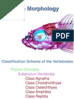 019 Fish Morphology