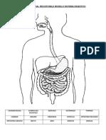 Ficha 5 Recortable de Sistema Digestivo