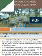 CLASE-4-Nutrición-Ovina-y-Manejo-Nutricional-2018.pdf