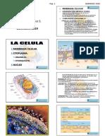 HISTOLOGIA 1 ALUMNO 2019.pdf