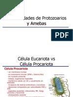 0823_Generalidades_de_protozoarios_y_amebas.ppt