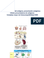 MHC-maduración LT (1)