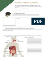 Como Funciona El Sistema Digestivosept 22 (2)