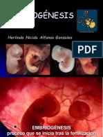 Embriogenesis