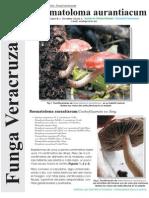 FUNGA VERACRUZANA Num.91 Naematoloma aurantiaca