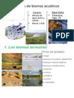 biomas de dayana.docx