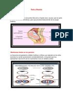 Parto y Placenta