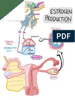 OBGYN - Oestrogen Production.pdf