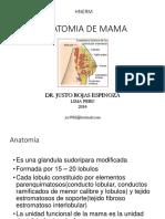 ANATOMIA DE MAMA.pdf