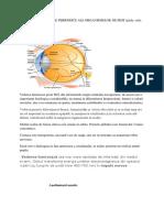 Tema 1 Axele Si Planurile de Organizare